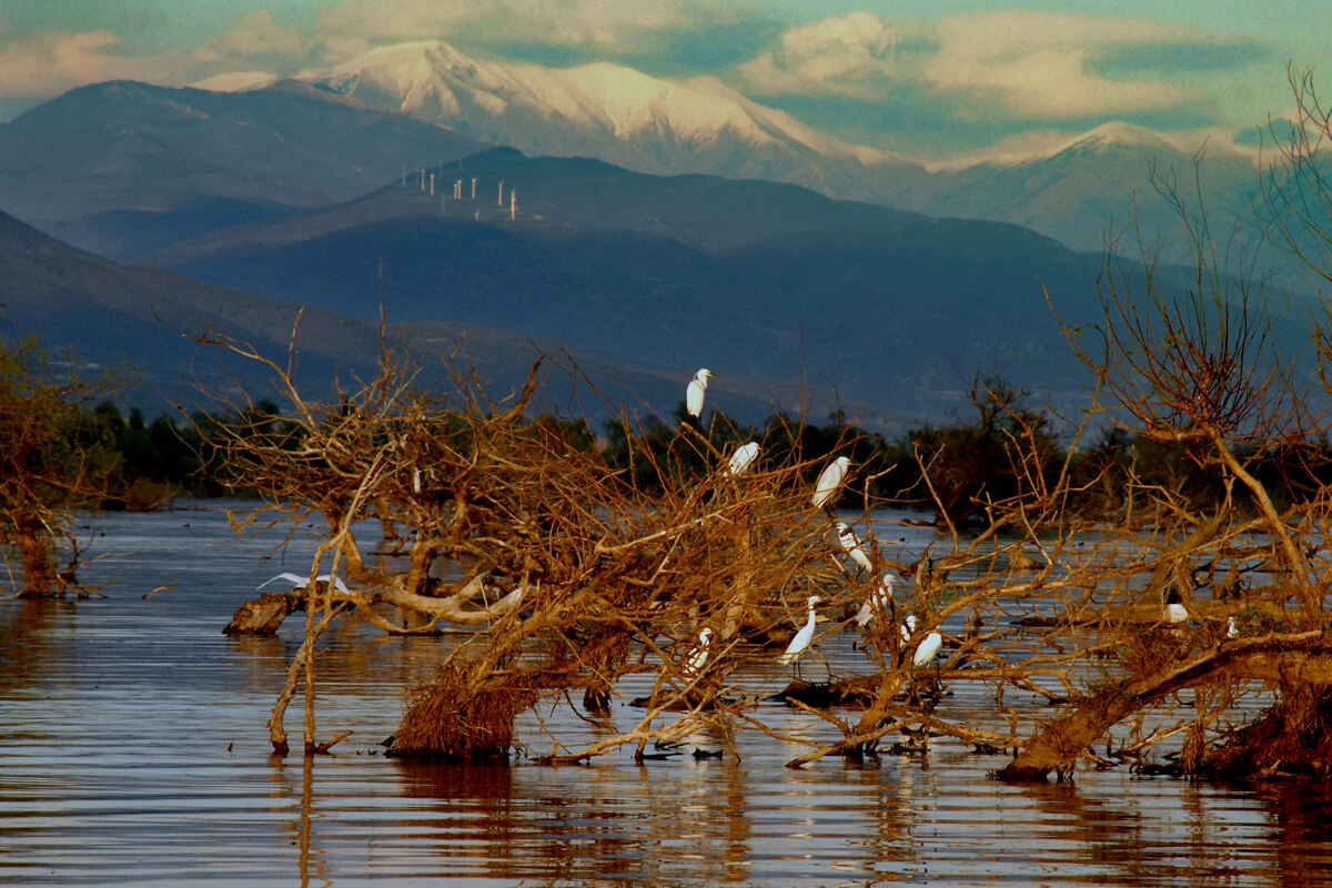 Kerkini lake - Photo from Serres P.E Tourism's Office archive