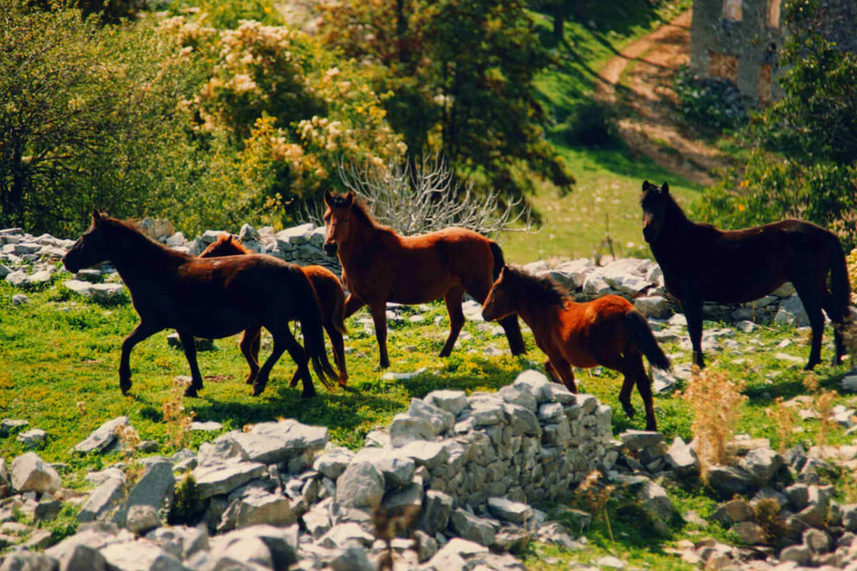 Wild horses - Photo by Dimofelia's archive