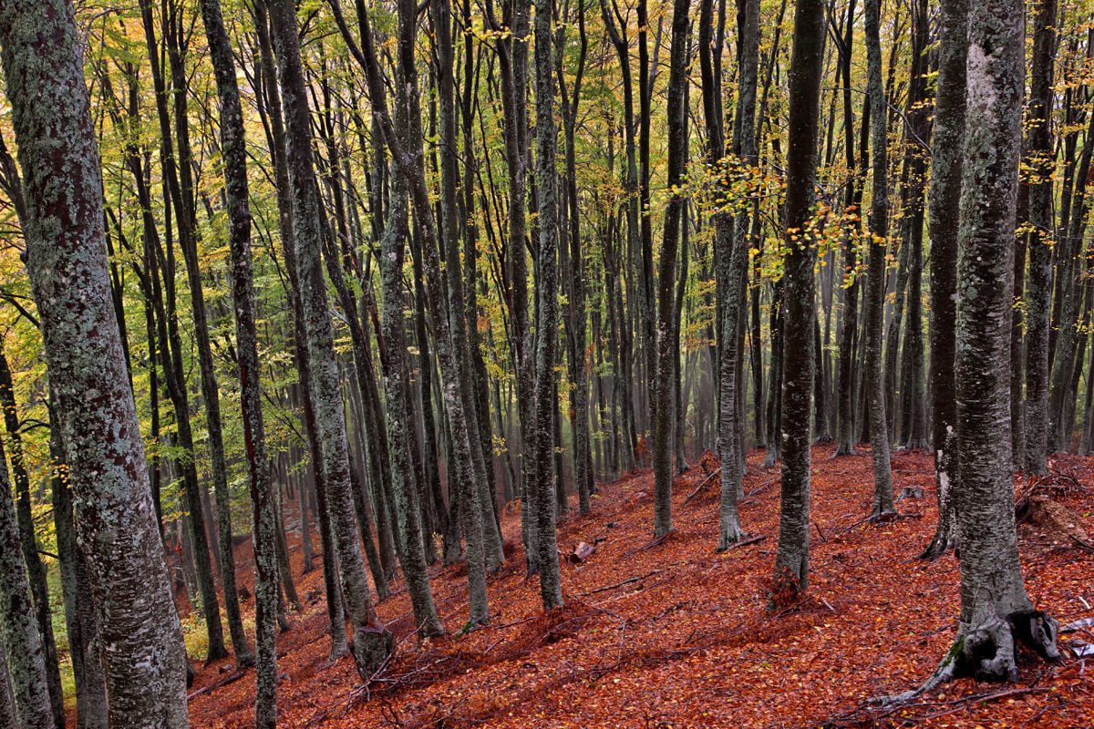 Δάσος στο όρος Παγγαίο - Φωτογραφία Ηρακλής Μήλας