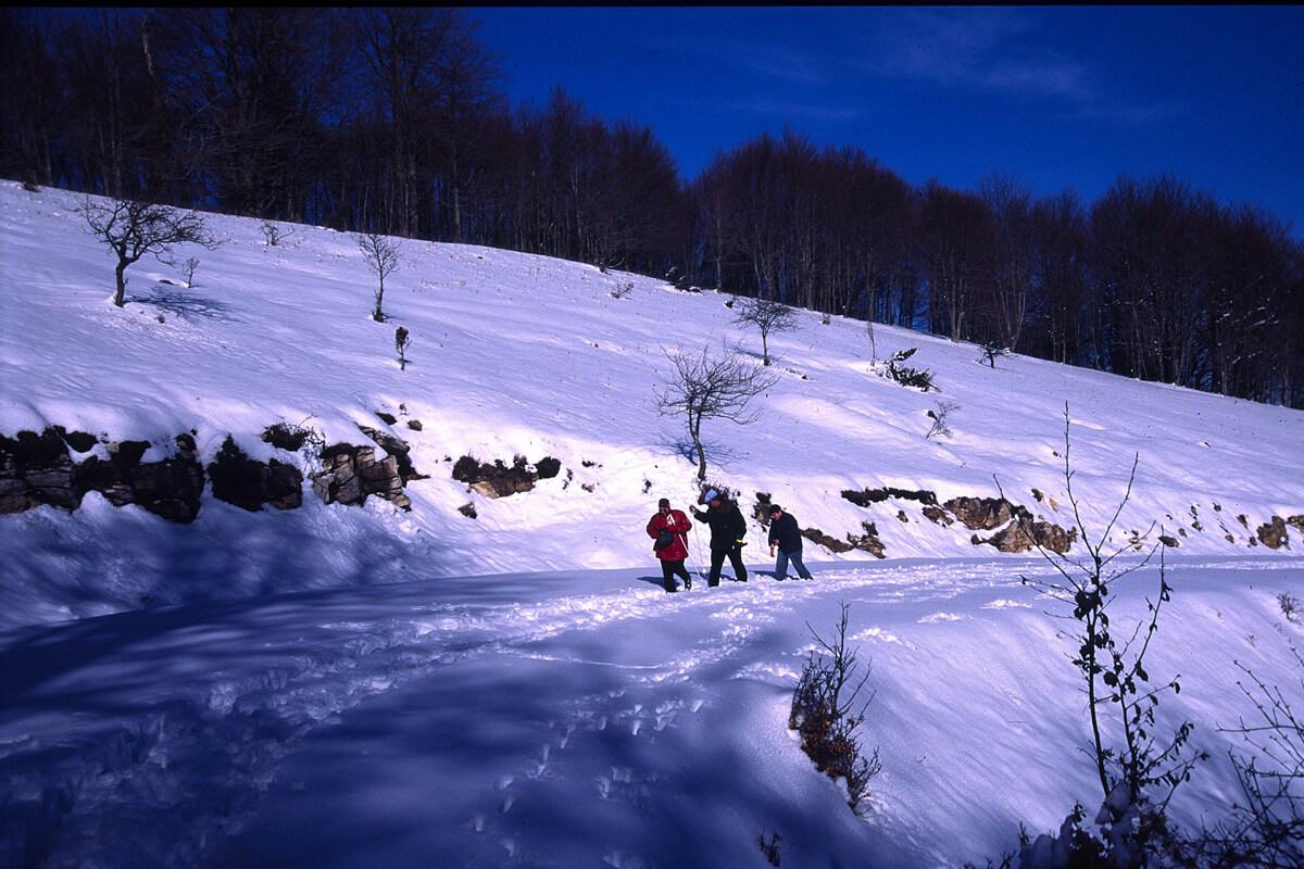 Χιόνια στο όρος Παγγαίο - Φωτογραφία Artware