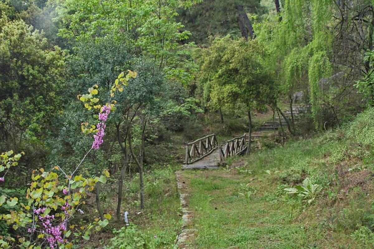 Περιαστικό δάσος - Φωτογραφία ΕΟΣ Καβάλας