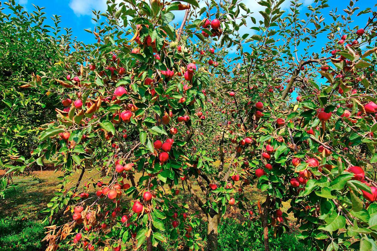 Καλλιέργειες - φωτογραφία Artware