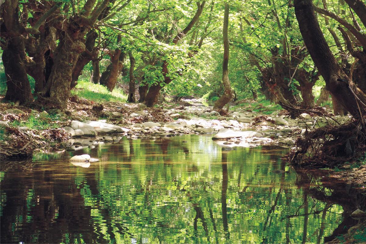 Деревня Левки, фотография из архивов ДИМОФЕЛИИ